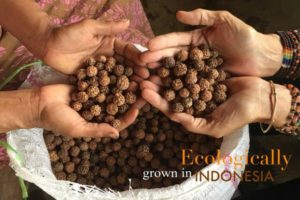 Aum-Rudraksha-malas-jewelery-sustainable-rudraksha-grown-in-indonesia_web_grande